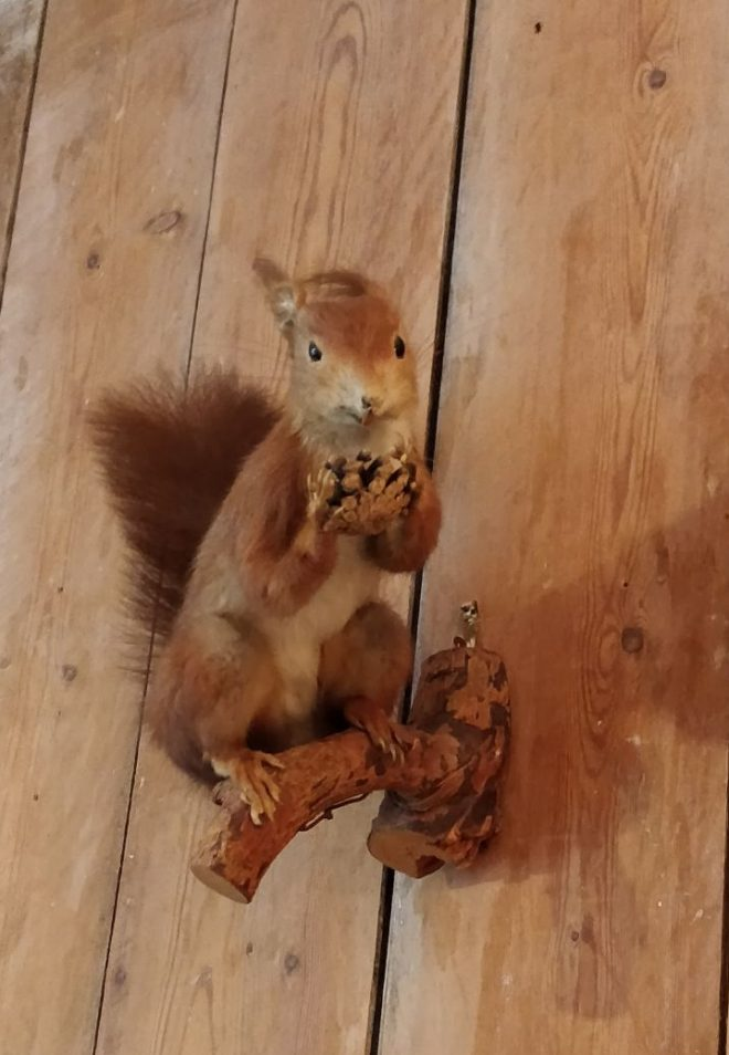 Taxidermy squirrel